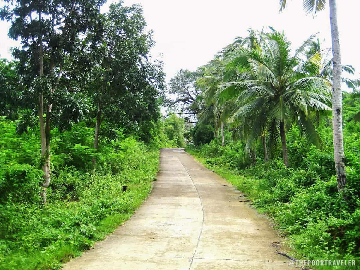 Forest Guimaras
