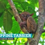 Philippine Tarsier Conservation Area in Loboc, Bohol