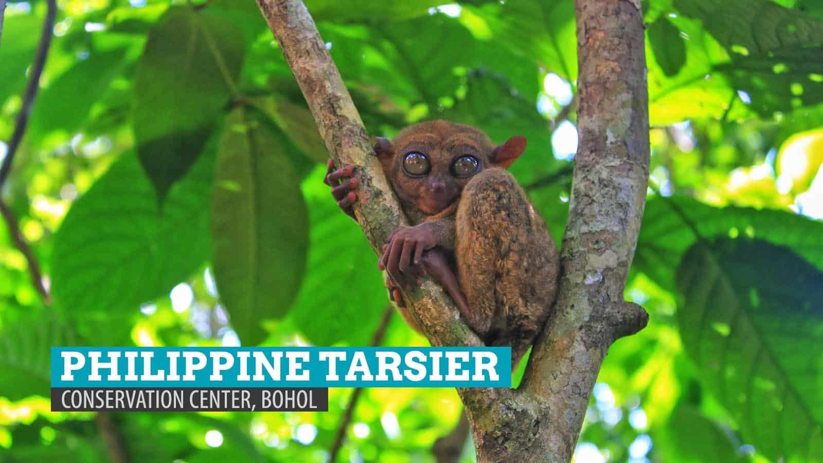 Philippine Tarsier Conservation Area in Loboc, Bohol