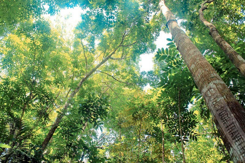 Canopy of Loboc forest