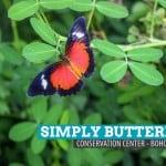 Simply Butterflies Conservation Center: Bilar, Bohol