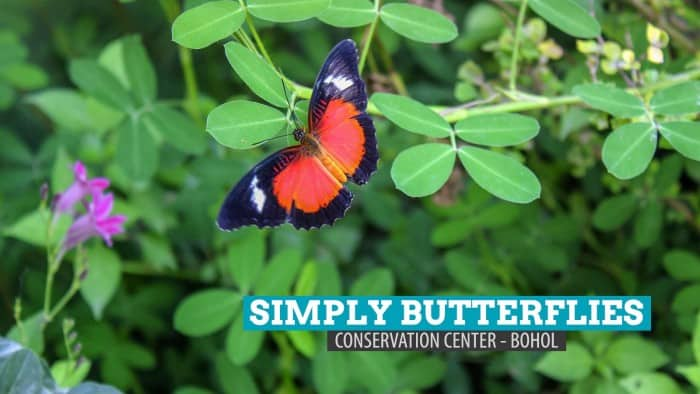 Simply Butterflies Conservation Center: Bilar, Bohol