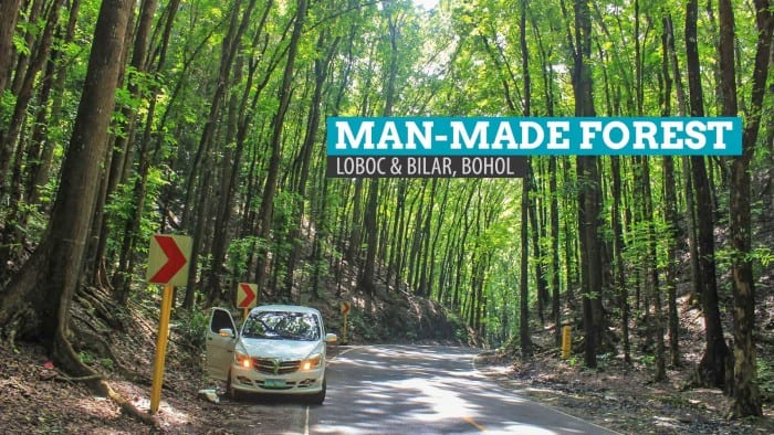 Man-made Forest of Bilar and Loboc, Bohol