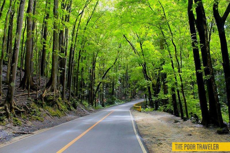 Manmade Forest of Bilar and Loboc