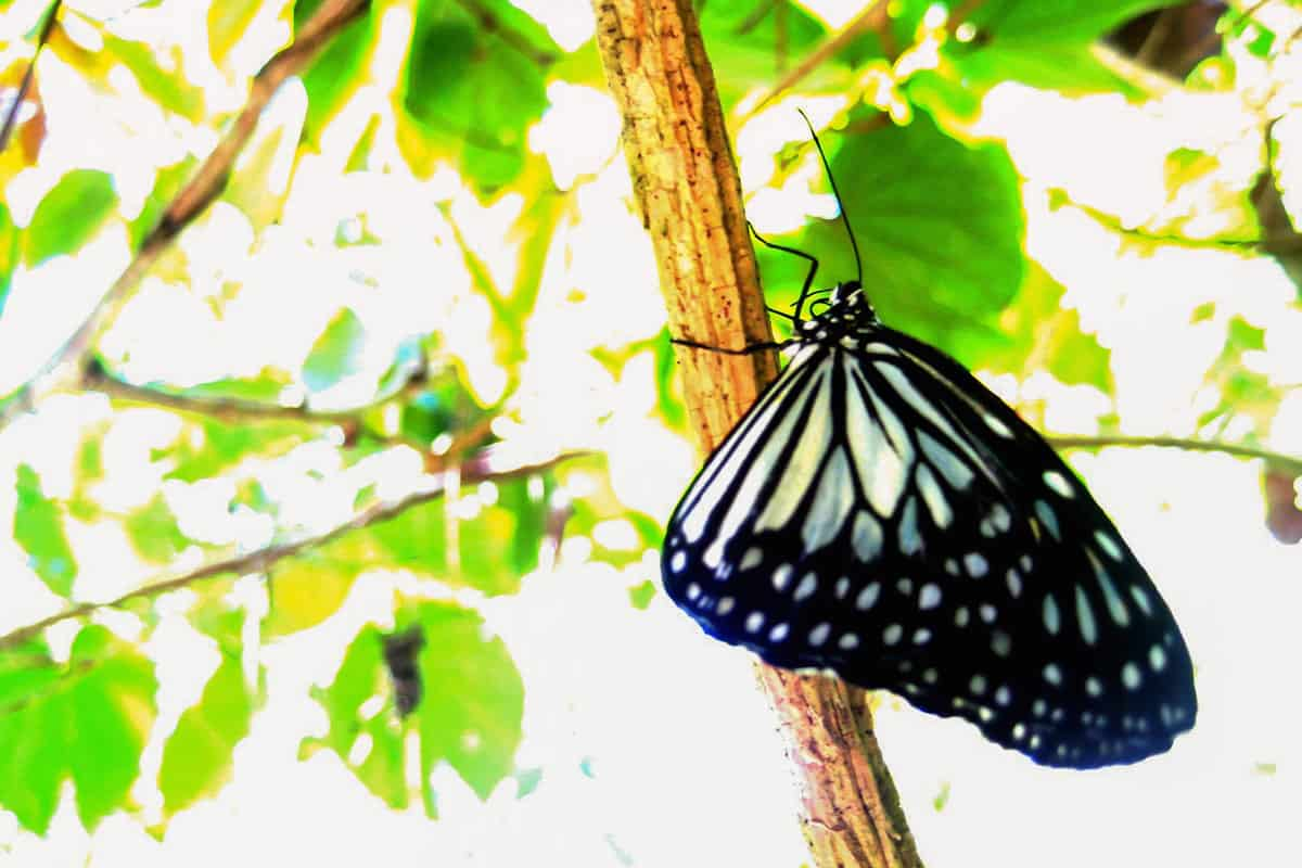 simply-butterfly-conservation-center