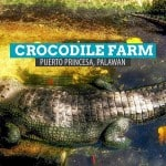 Crocodile Farm: Palawan Wildlife Rescue Center in Puerto Princesa, Philippines