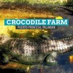 Crocodile Farm: Palawan Wildlife Rescue Center in Puerto Princesa, Philippines