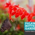 Palawan Butterfly Garden: Beauty and the Bugs in Puerto Princesa, Philippines