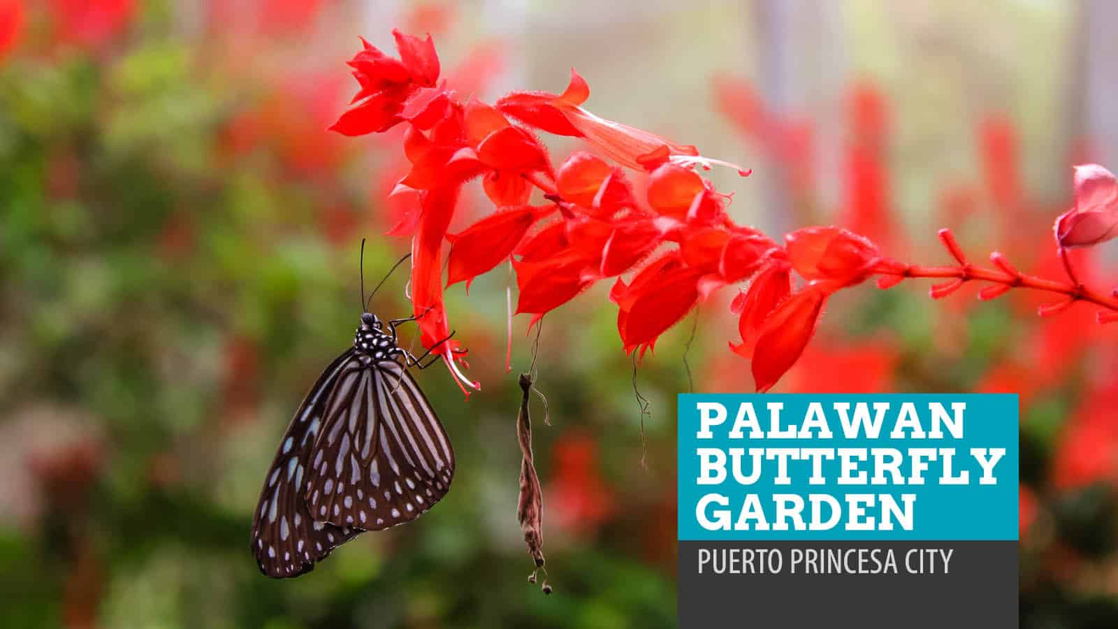 Palawan Butterfly Garden: Beauty and the Bugs in Puerto Princesa