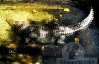 Palawan Wildlife Rescue Center (formerly Crocodile Farm)