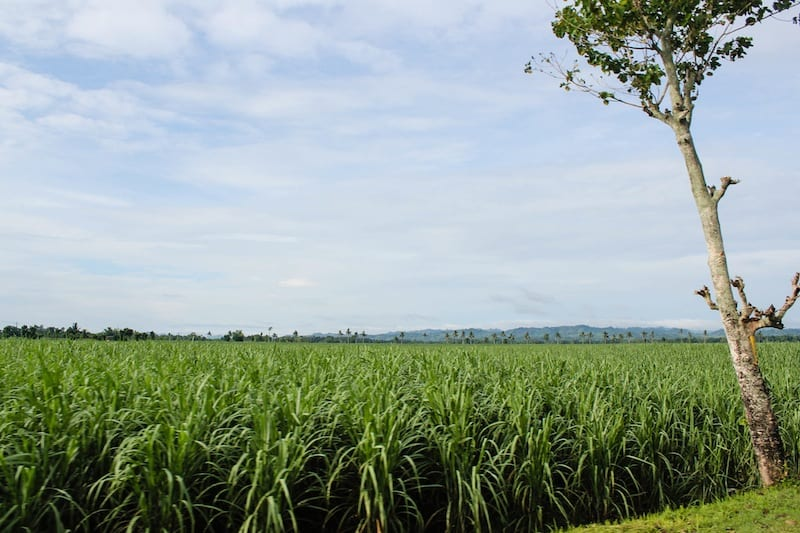 negros occidental countryside