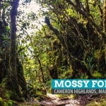 The Mossy Forest of Gunung Brinchang: Cameron Highlands, Malaysia