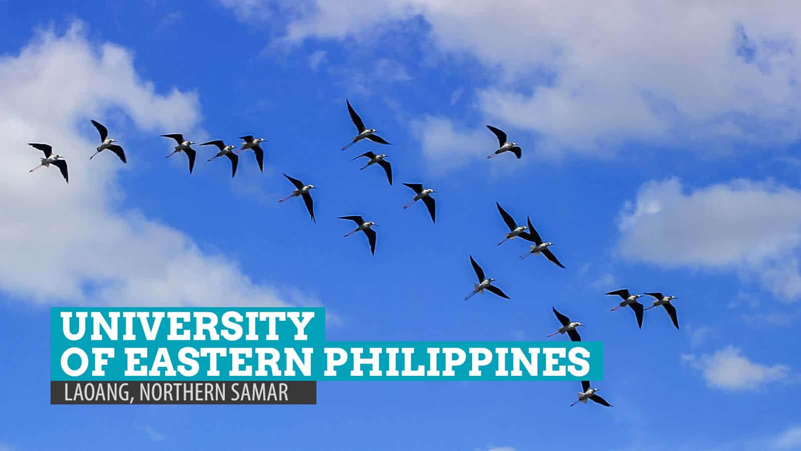 Birdwatching at University of Eastern Philippines: Laoang, Northern Samar