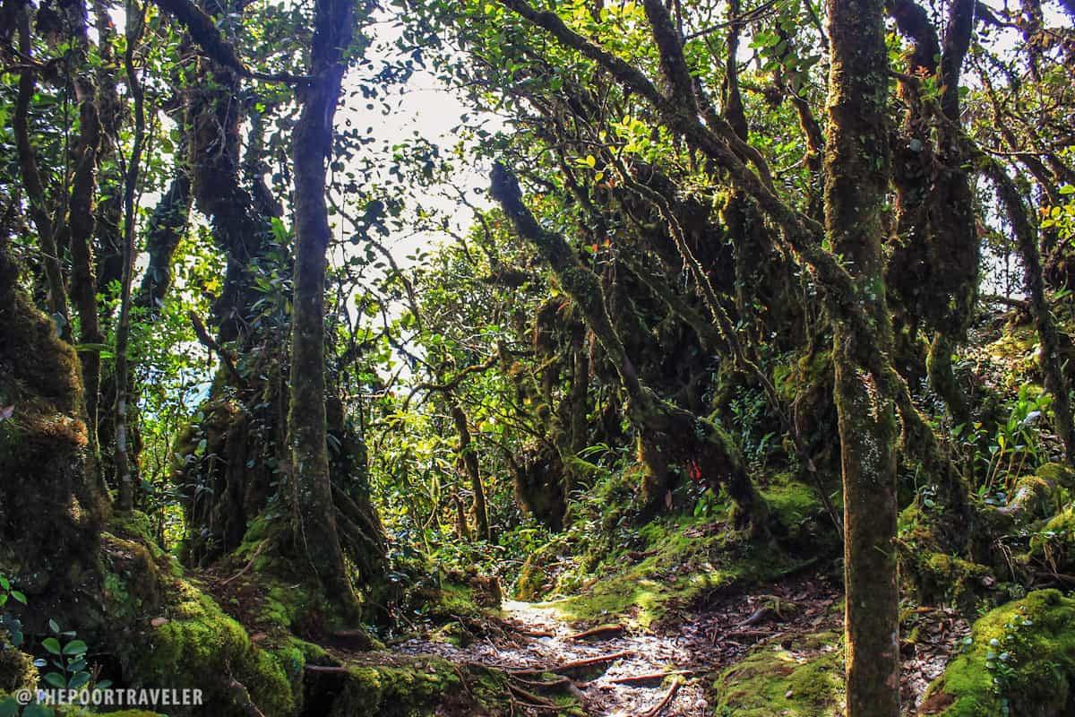 The Mossy Forest of Gunung Brinchang, Cameron Highlands