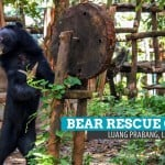 Tat Kuang Si Bear Rescue Center: Much Love to Bear in Luang Prabang, Laos
