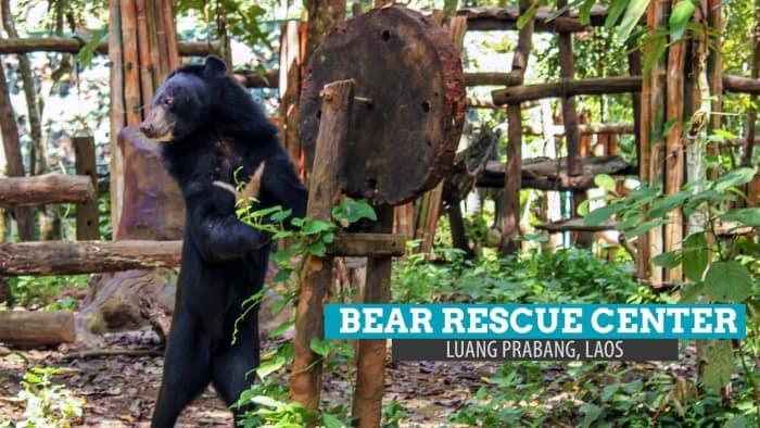 Tat Kuang Si Bear Rescue Center: Much Love to Bear in Luang Prabang, Laos