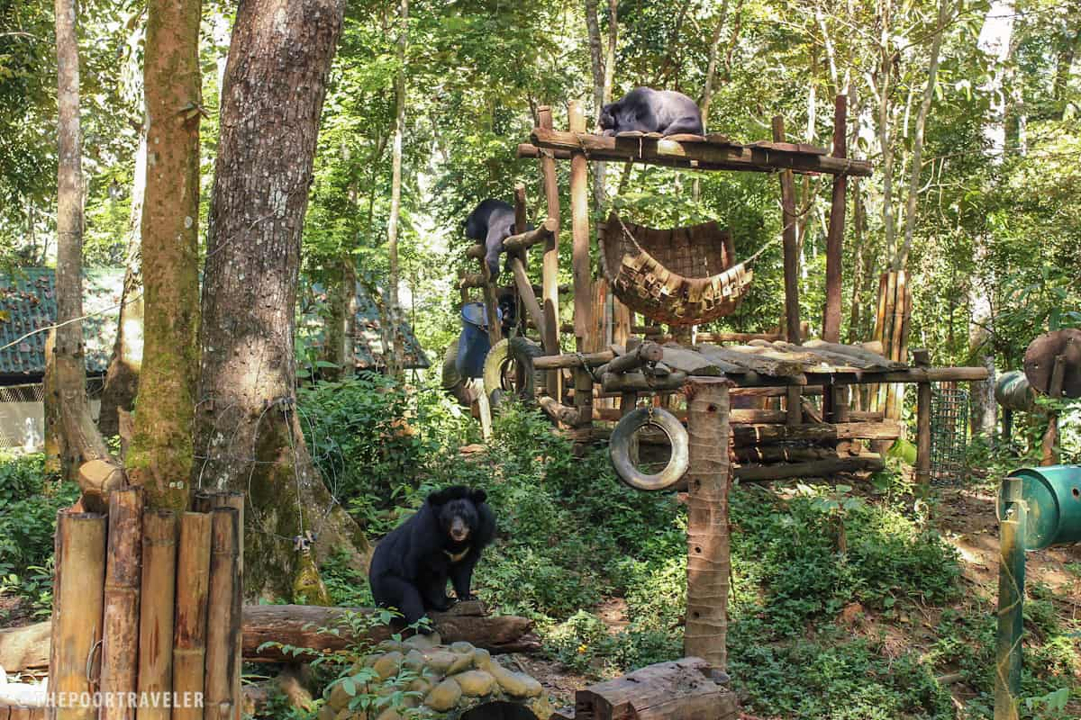 The bears were rescued from illegal wildlife trade