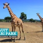 CALAUIT SAFARI PARK: What to Expect & How to Get There