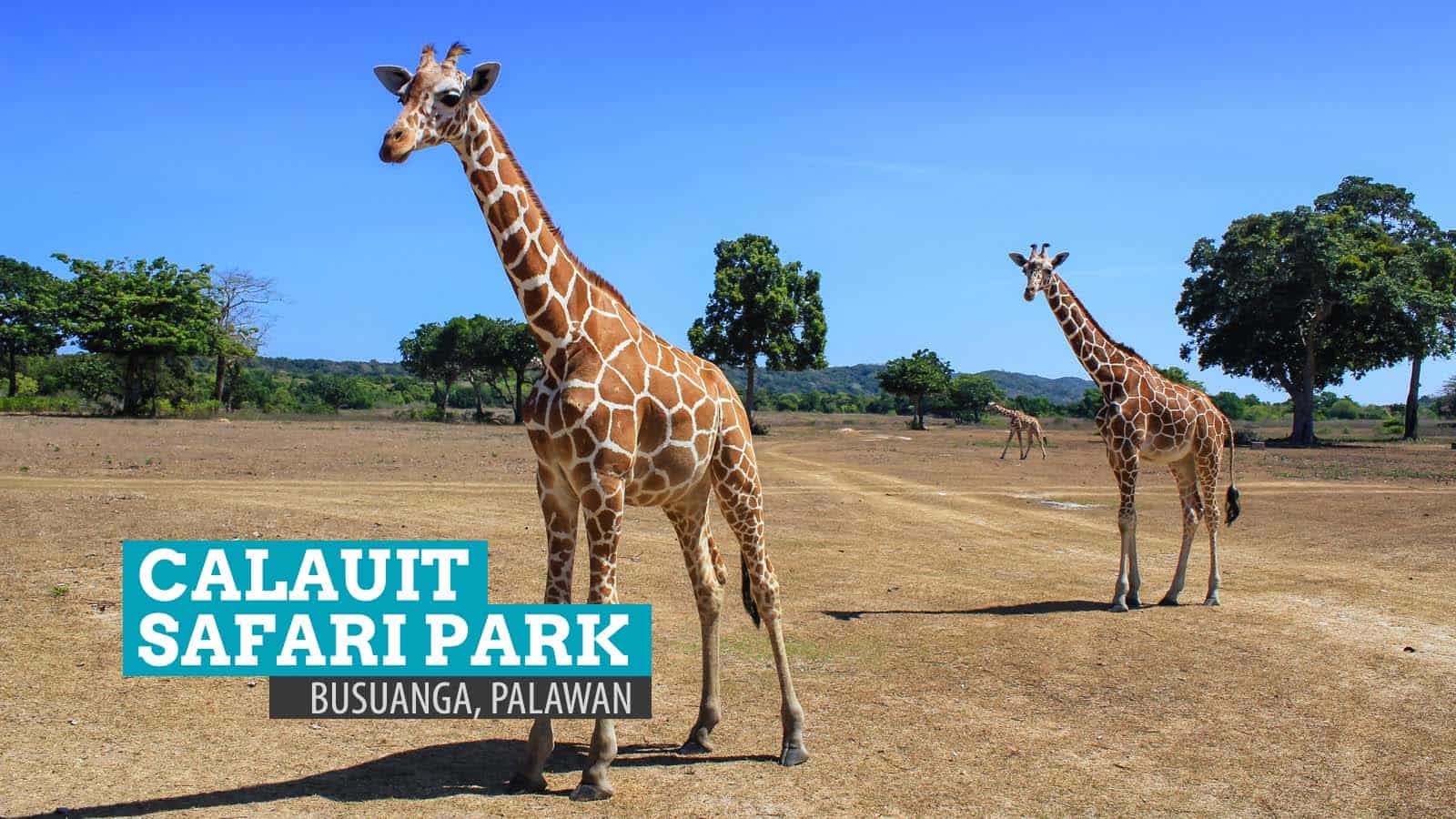 Calauit Safari Park: A Piece of Africa in Palawan, Philippines