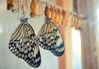Simply Butterflies Conservation Center
