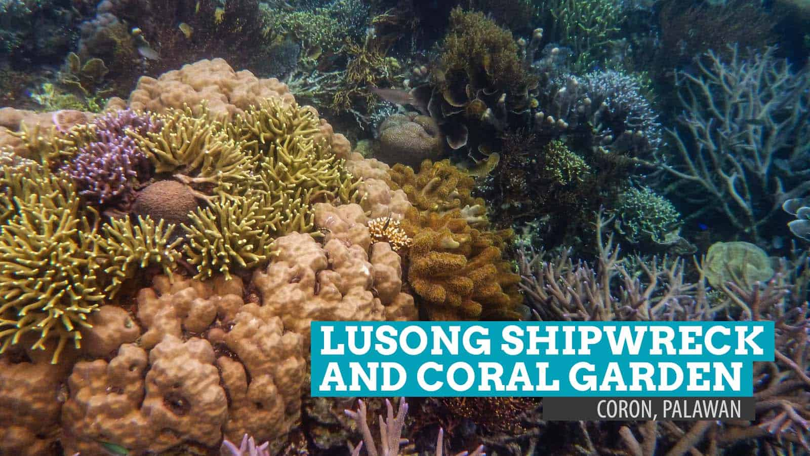 Lusong Shipwreck And Coral Garden Shallow Reverie In