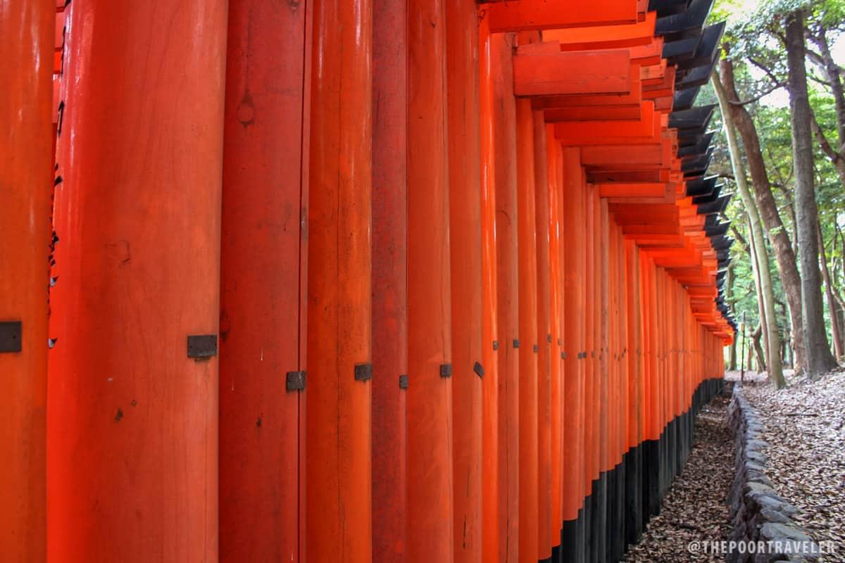 Orange dominoes!