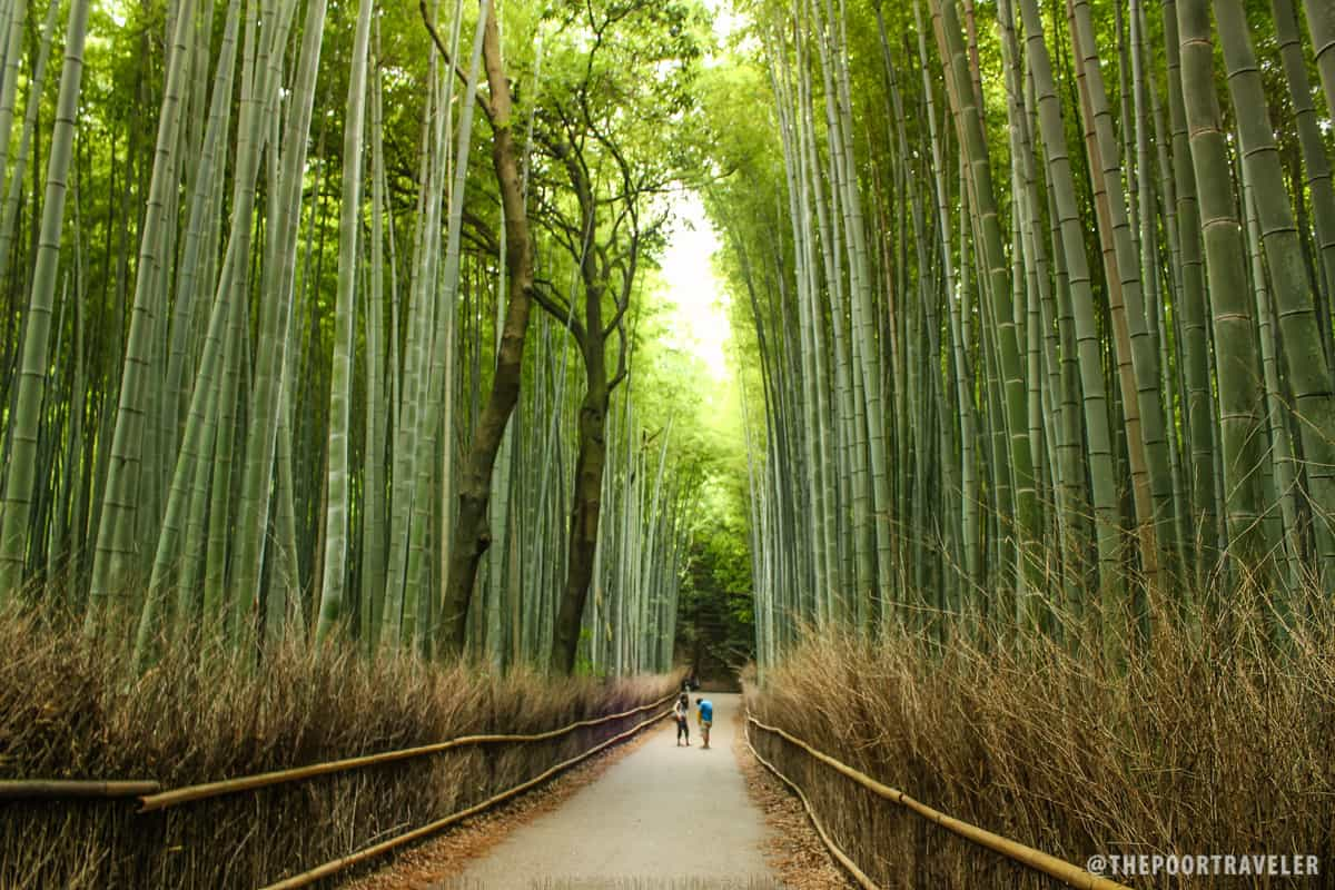 See how tall these bamboo trunks are?