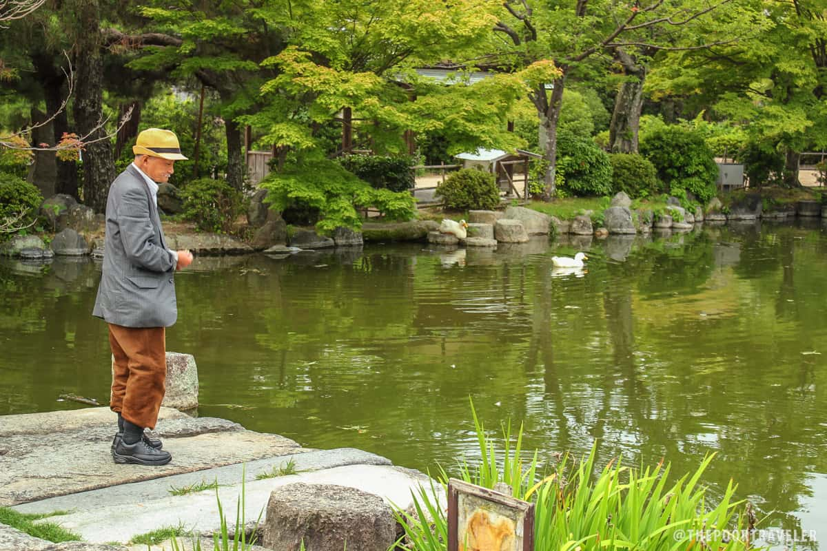A man feeding the water fowl