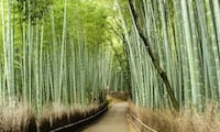 Arashiyama Temples and Bamboo Groves