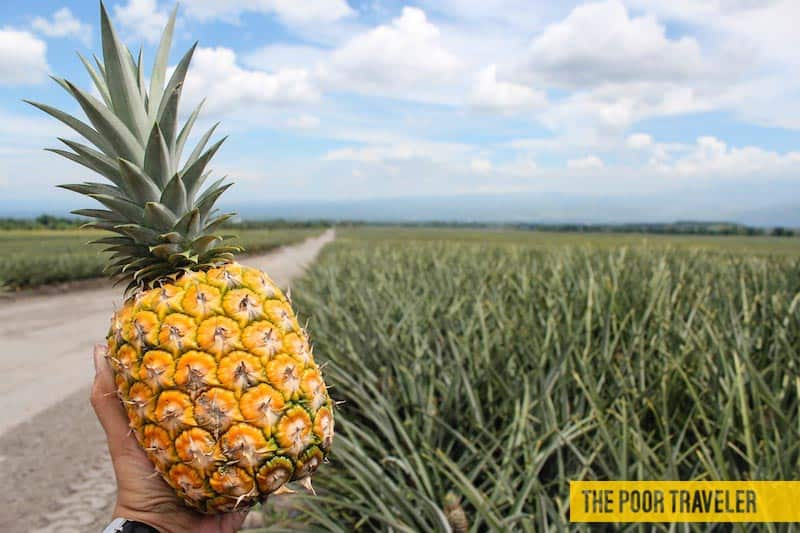 dole pineapple plantation polomolok south cotabato