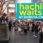 HACHIKO WAITS: The 'Faithful Dog' at Shibuya Crossing – Tokyo, Japan