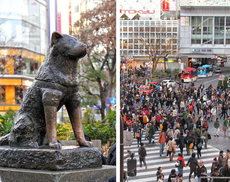 Faithful dog Hachiko