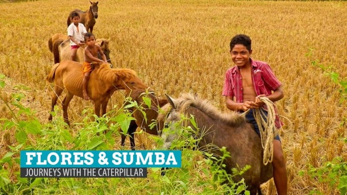 Flores and Sumba, Indonesia: Excerpt from 'Journeys with the Caterpillar'