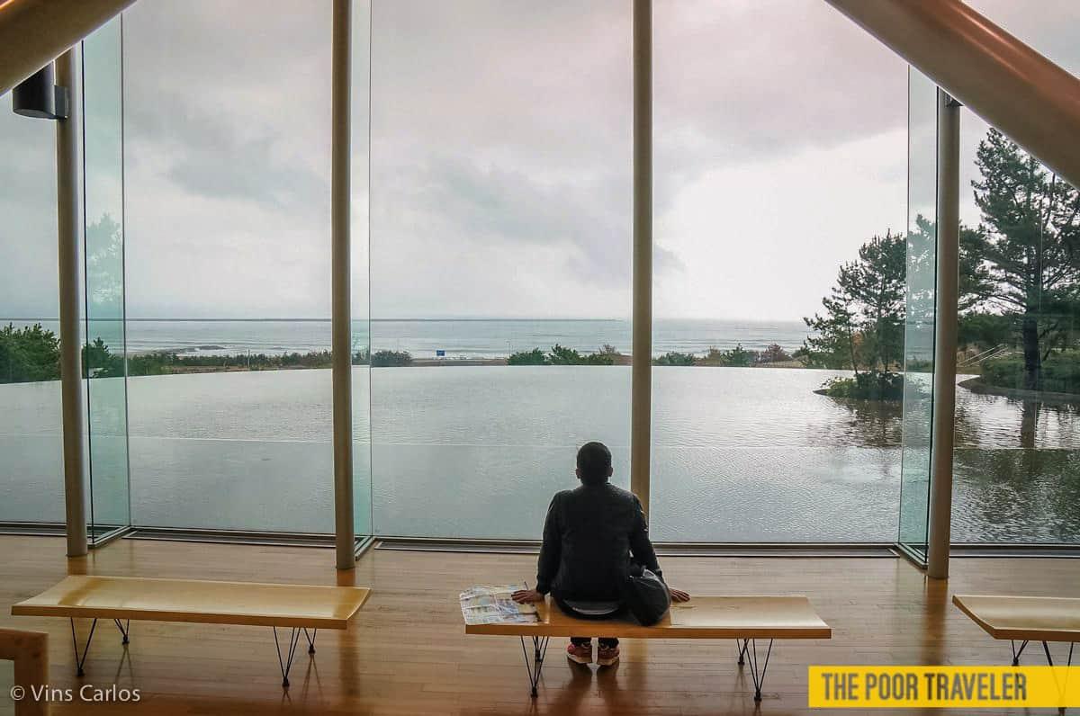 Facing the Pacific! The Hitachi Seaside Park lies on the Ibaraki coast, facing the world's biggest ocean.