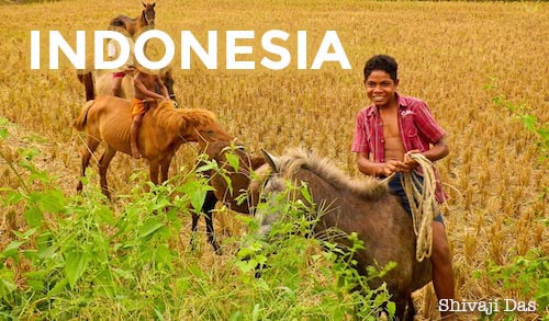 Sumba is known as the Texas of Indonesia