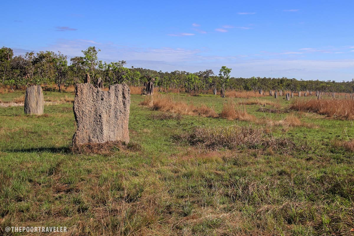 Magnetic Termite Mounds in Litchfield National Park