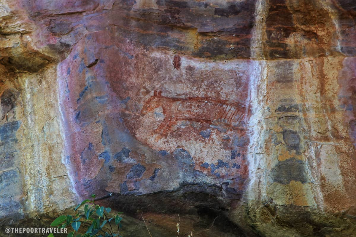The Thylacine (Tasmanian Tiger) has been extinct for 2-3 thousand years, but ancient dwellers here were able to paint an image of one.