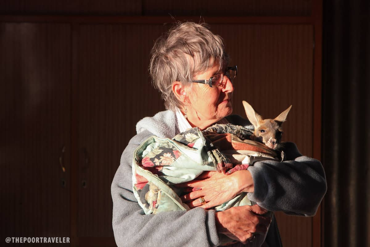 A woman carrying a joey in her arms.