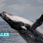 5 Simple Ways to Help Protect Whales