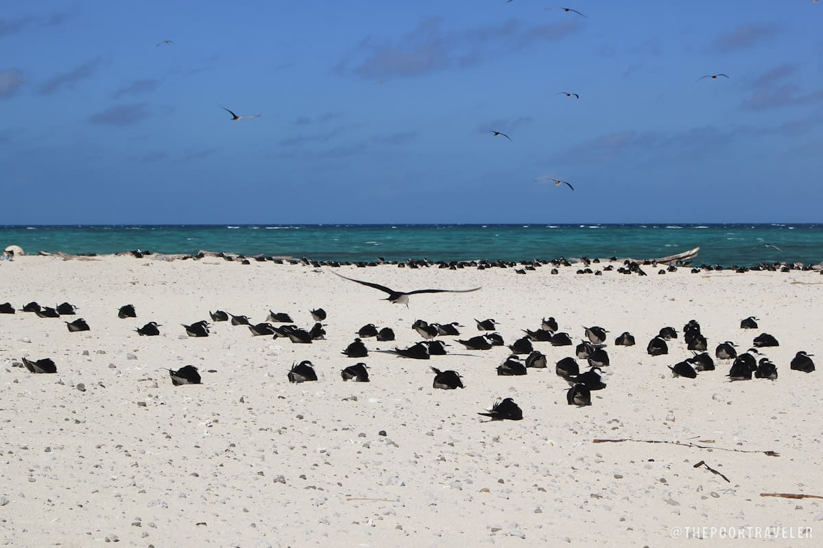 Michaelmas Cay is a breeding site for many species of terns.