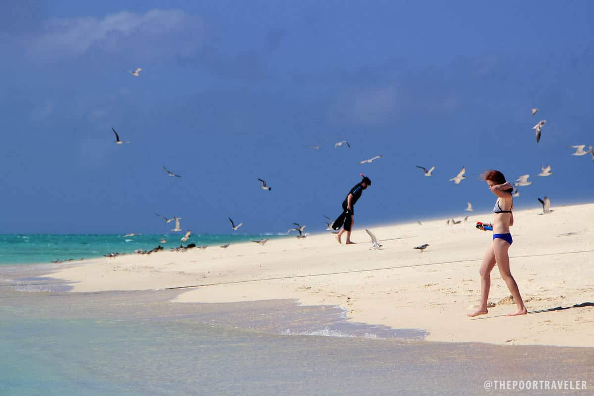 Michaelmas Cay is a paradise for snorkelers and beach bums alike.