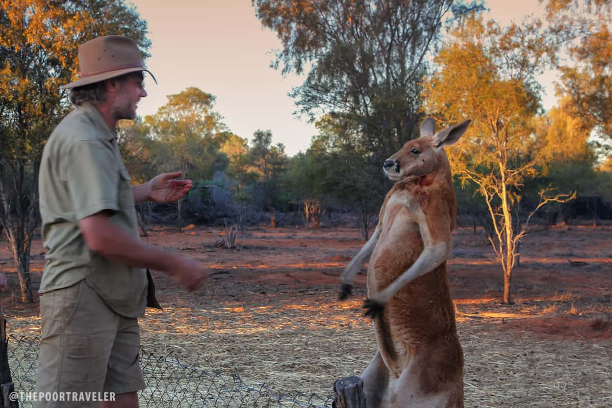 Roger, this mob's alpha male, feels challenged by Brolga. He once kicked Brolga near the groin, resulting in 6 stitches.