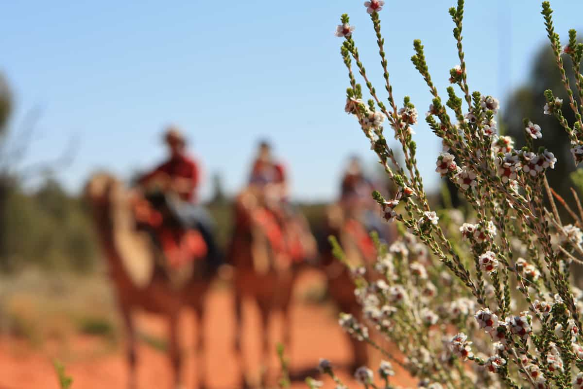 The trail will introduce many of the Outback's flora