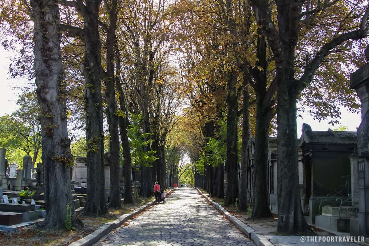 Towering trees flank the main streets of the cemetery