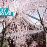 10 Photos of Cherry Blossoms in Japan