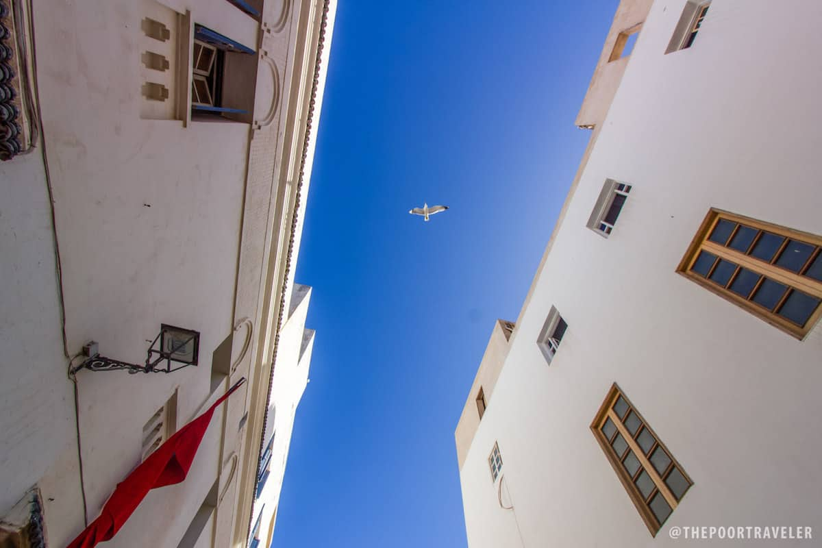 Seagull Overhead.