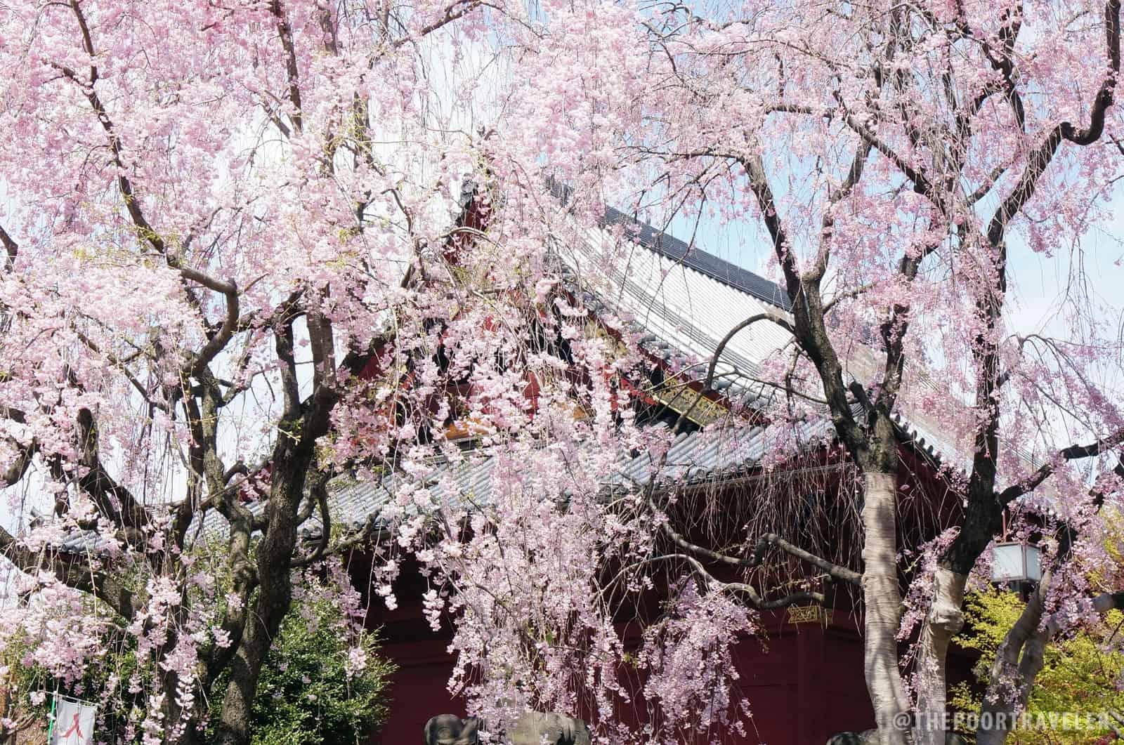 At Ueno Park, Tokyo