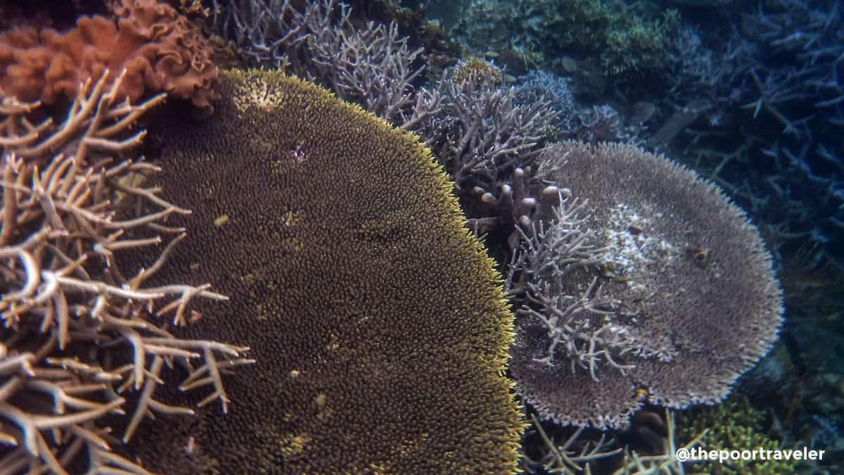 Lusong Coral Garden, Coron