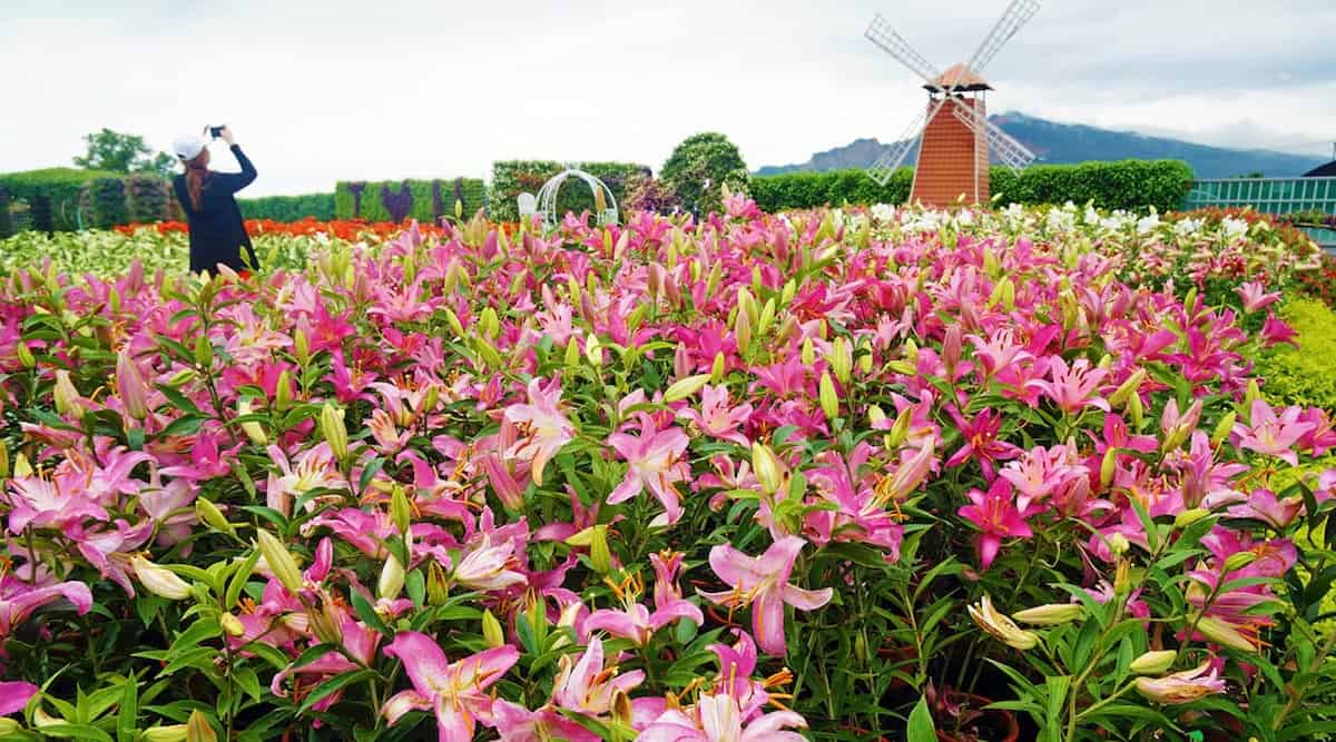 Chung She Flower Garden