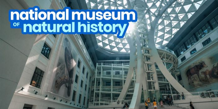 NATIONAL MUSEUM OF NATURAL HISTORY in MANILA: Guide for First-Timers